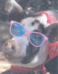 WhatsApp indovinello del maiale con occhiali per non modificare la foto nel profilo